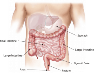 abdomen-1698565