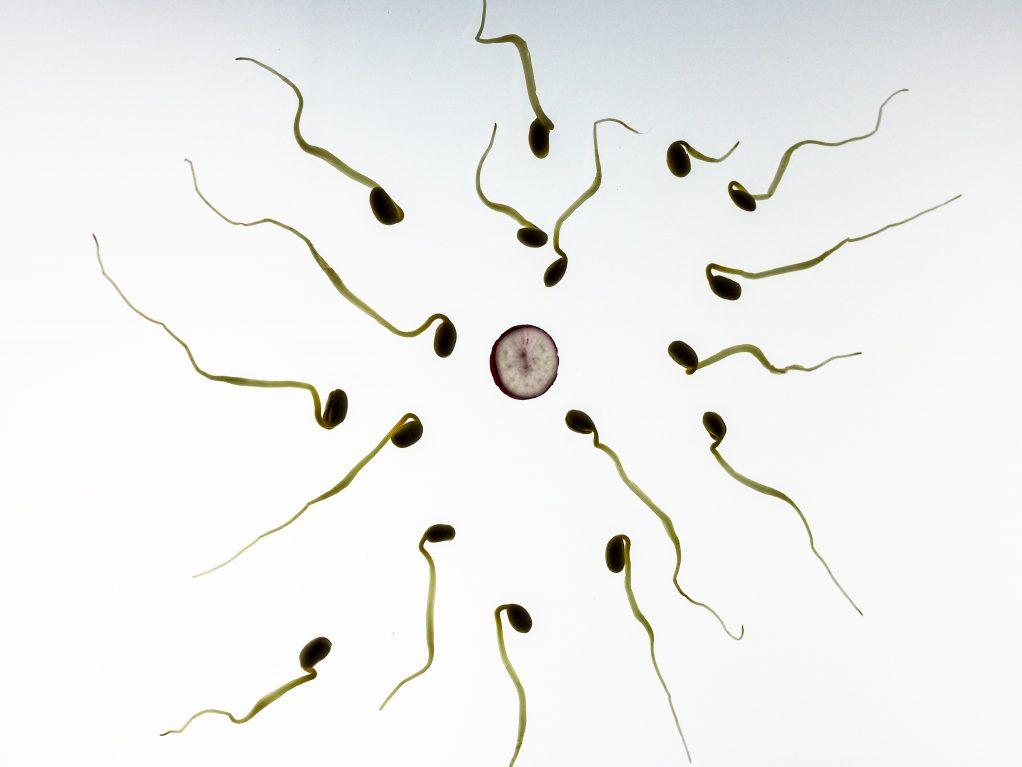 sperm-956480